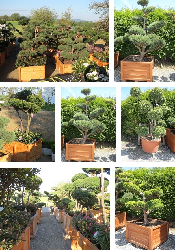 Bonsai overview
