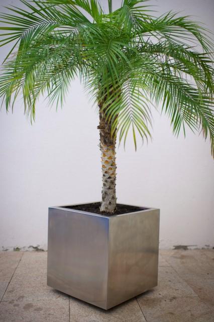 Pflanzengefäss Chromstahl
