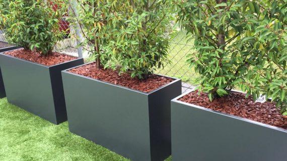 zypressen oder toskanische zypressen cupressus semp. Black Bedroom Furniture Sets. Home Design Ideas
