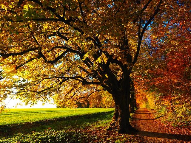 Winterlinde Herbst Hans pixabay tree-779827_640